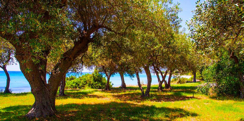 Malt BeachFront Villa, Mola Kalyva Slide-1