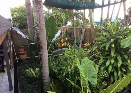 A Little Haven, Near Cairns Cbd
