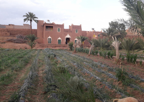 Hostel jnane dar diafa is in the center of tamegrouteface of the bibiotheque